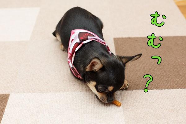米粉ササミを食べだす