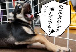 子犬の噛み癖を直す為に行った8個のしつけ方法