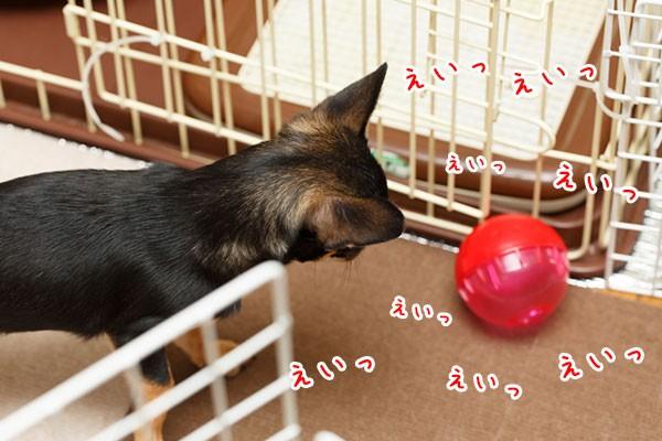 犬が良く遊ぶIQボール