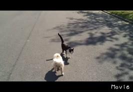 盲目の犬の散歩を猫がサポート