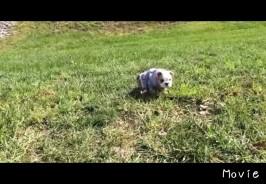 坂道を転がる子犬
