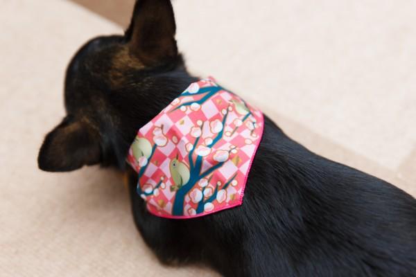 ペットサロンでスカーフ