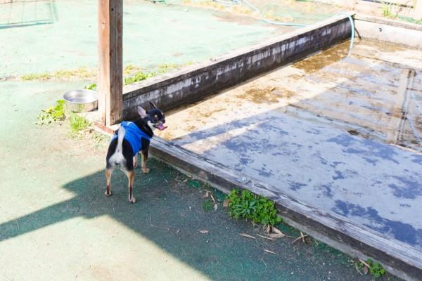 犬専用プール