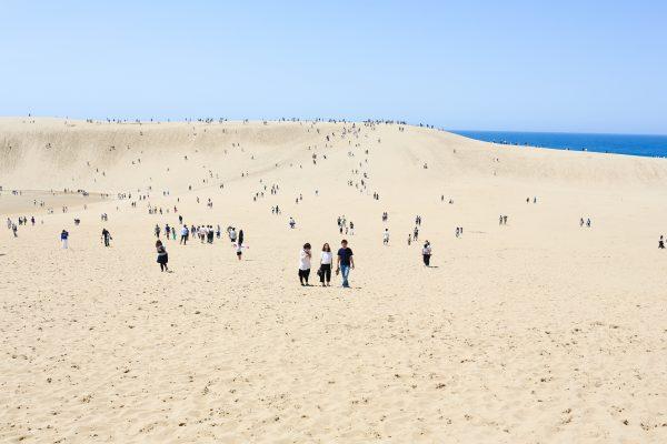 チワワのブログに鳥取砂丘が登場