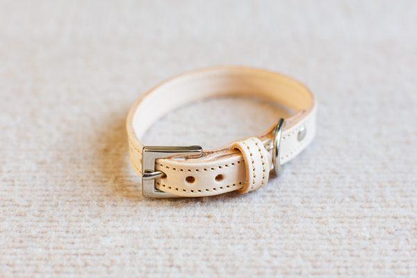 チワワのブログで首輪を紹介