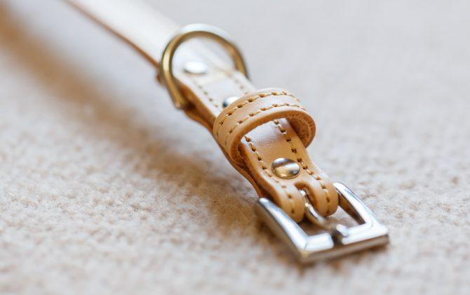 コレットの本革製首輪