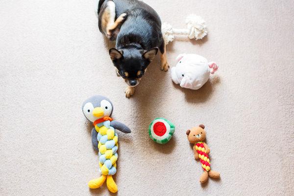 犬のおもちゃランキング