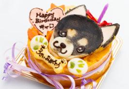 チワワのお祝いは犬用似顔絵ケーキで
