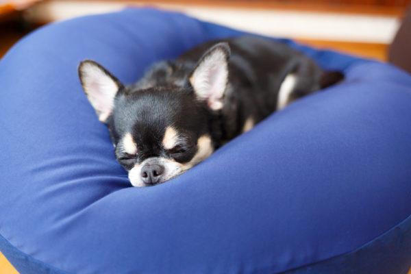 犬をダメにするサイズの小型犬に最適なビーズクッション