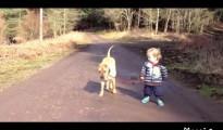犬と子供のヨチヨチサンポ