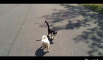 盲目の犬を誘導してサポートする相棒の猫!